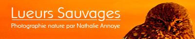 La bannière du site de Nathalie Annoye
